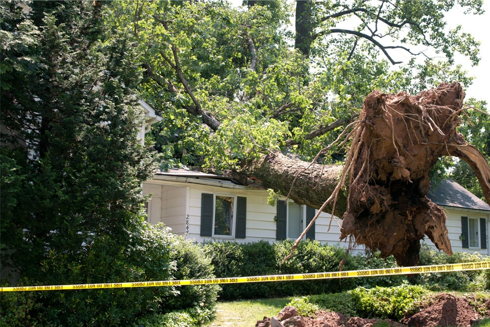 Tree fell on house damaged insurance company settled with public adjuster