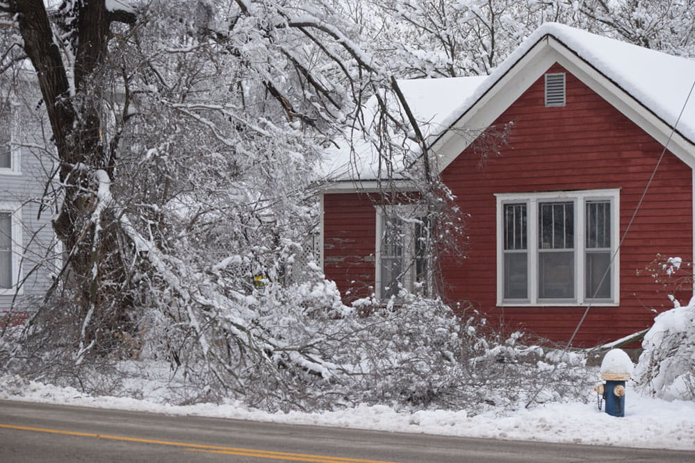 Tree falling in the winter insurance claim public adjuster